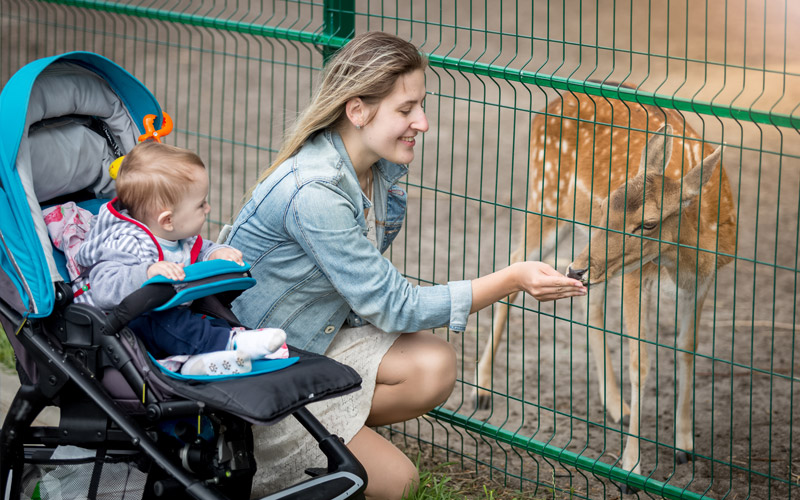 How do I educate my child about animal bites?
