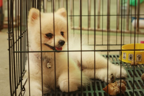 Puppy Mills Affect How Dangerous a Dog Will Be (Beware of Dog Bites)